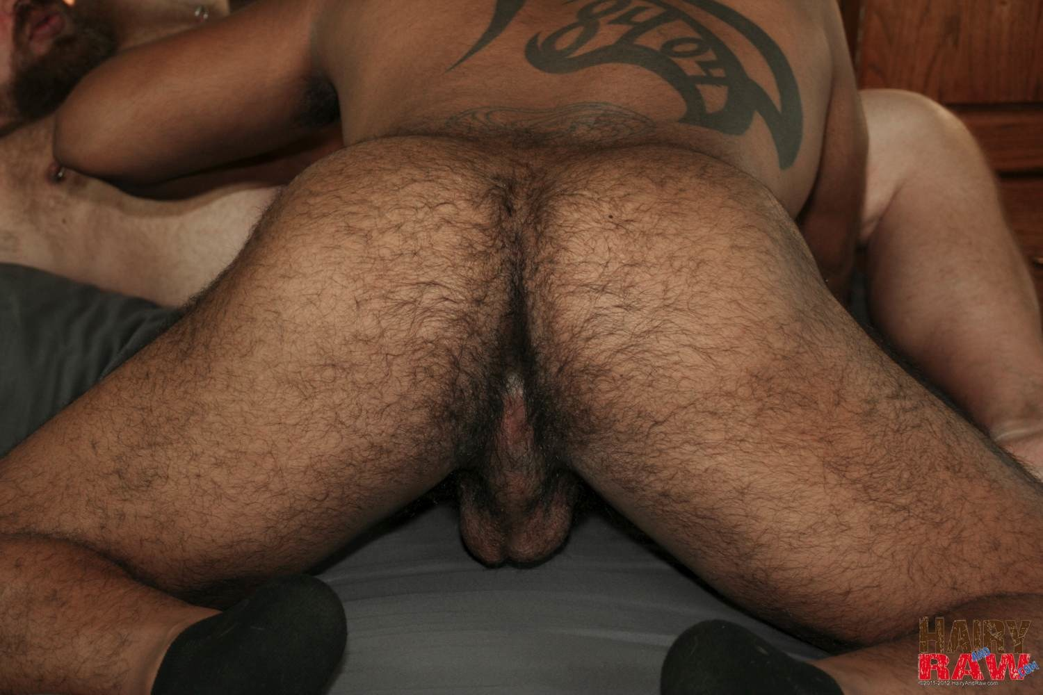 Hairy-and-Raw-DJ-Russo-and-Rico-Vega-Chubby-Bears-Barebacking-Amateur-Gay-Porn-06 Amateur Interracial Chubby Bears Barebacking Sex Pigs